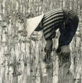 woman in rice field