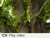 Trees video thumbnail