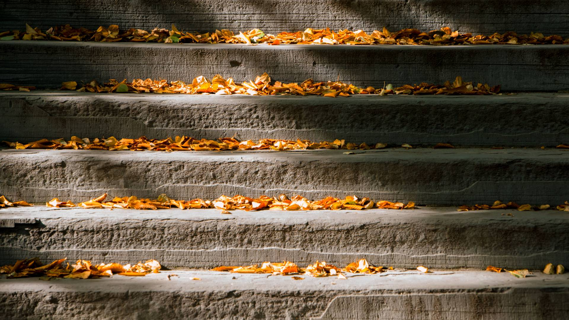 Fall leaves on stone steps