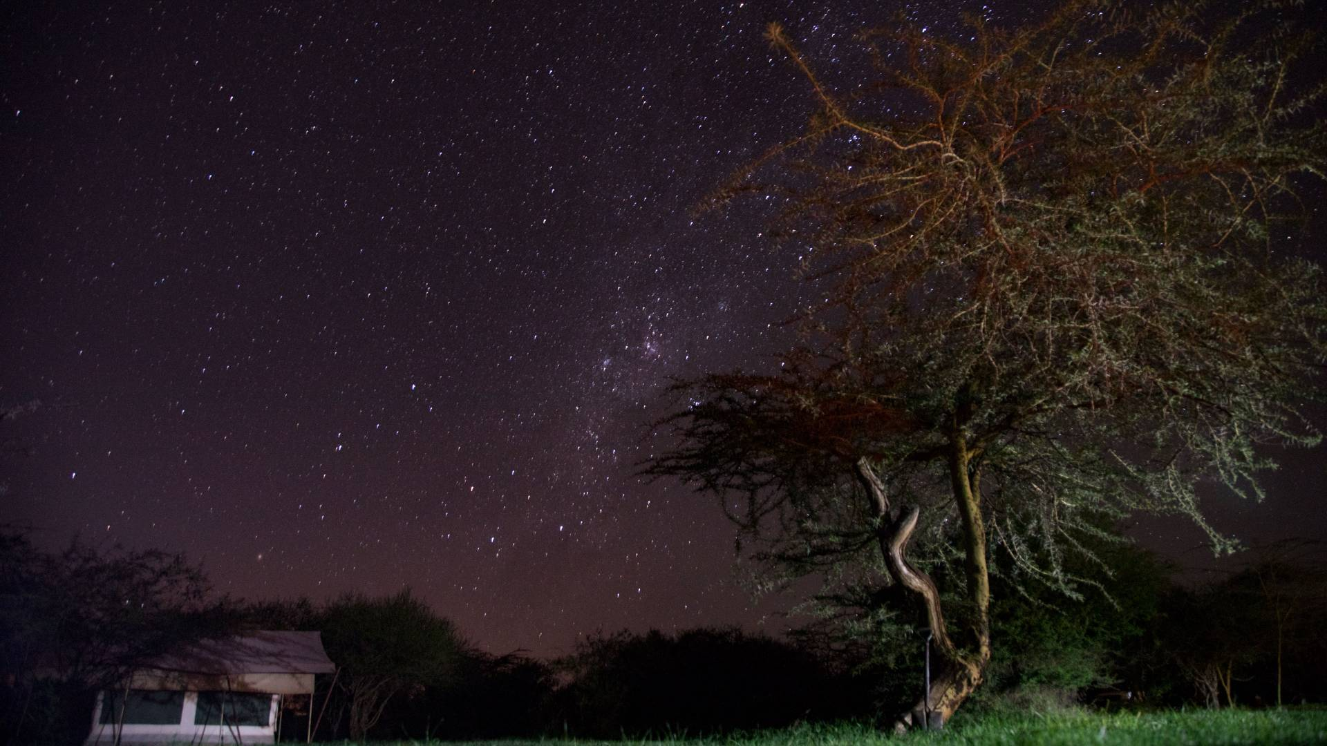 Stars at night at Mpala