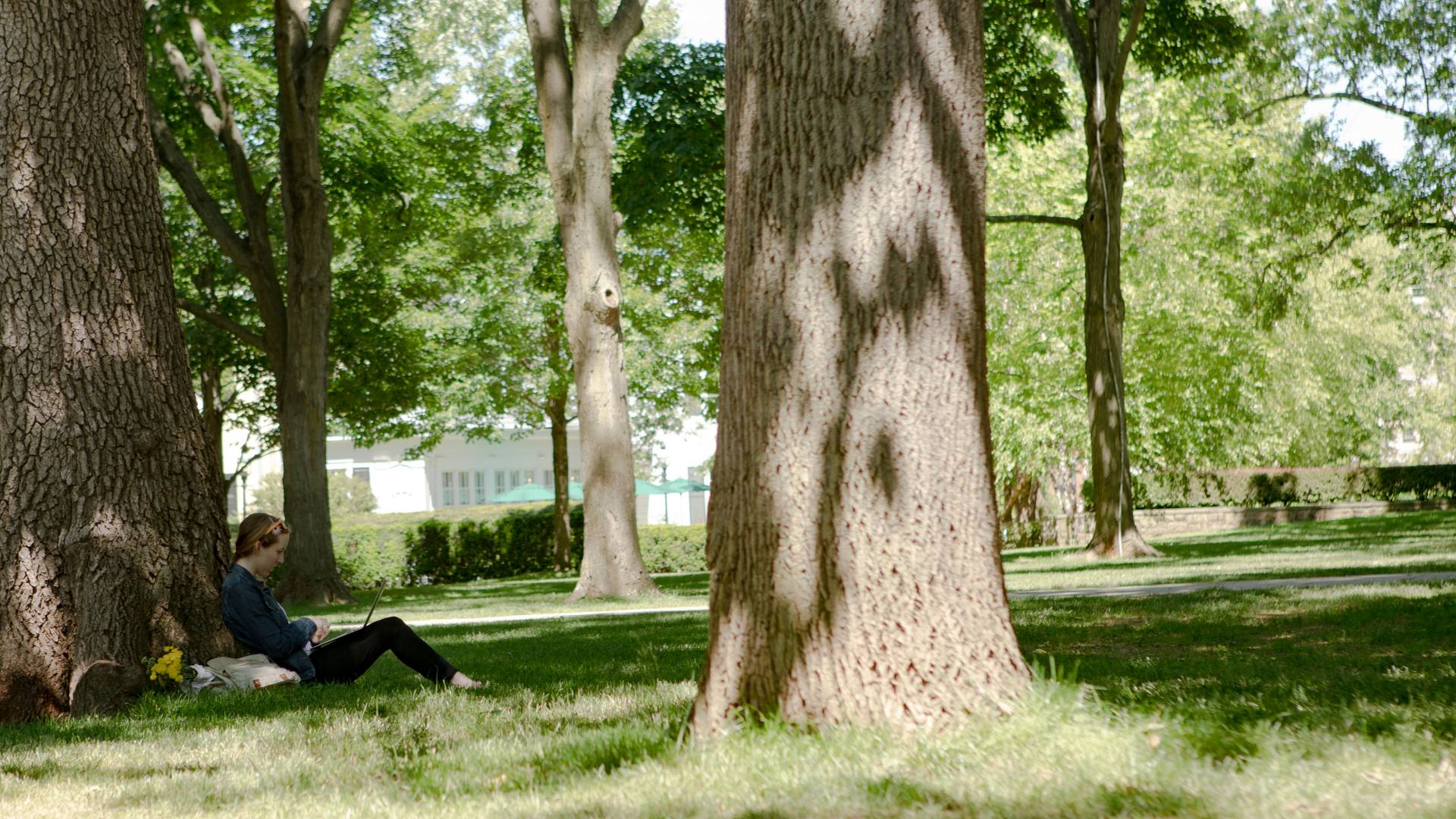 Student sitting under tree on campus