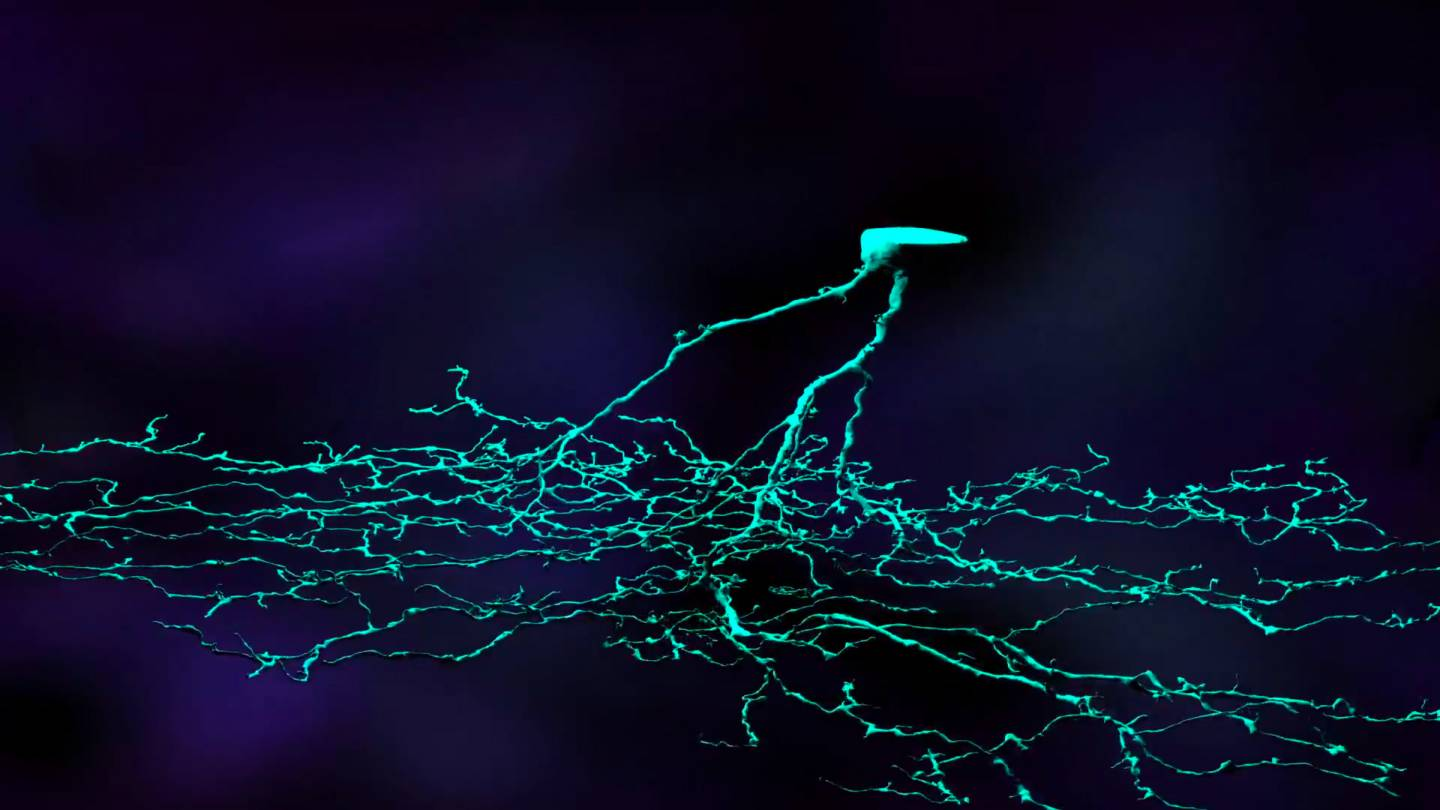 Neuron modeled from Eyewire
