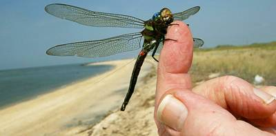 Tracking dragonflies