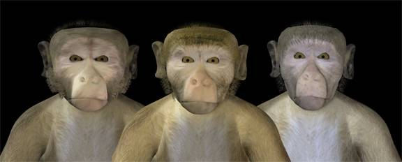 「uncanny valley monkey」の画像検索結果