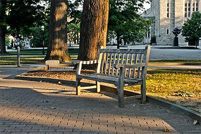 Early Morning bench