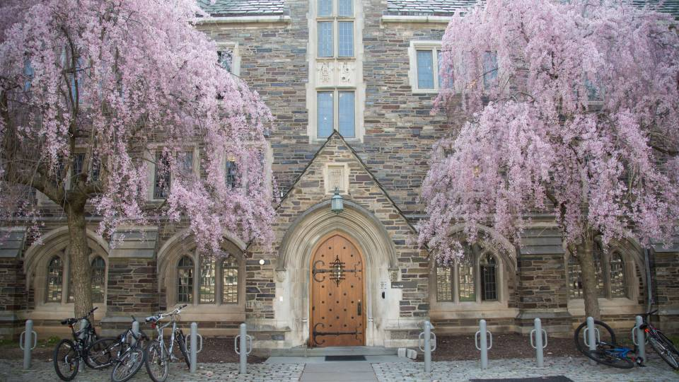 Pink buds bloom on trees outside an entry to Henry Hall dormitory.
