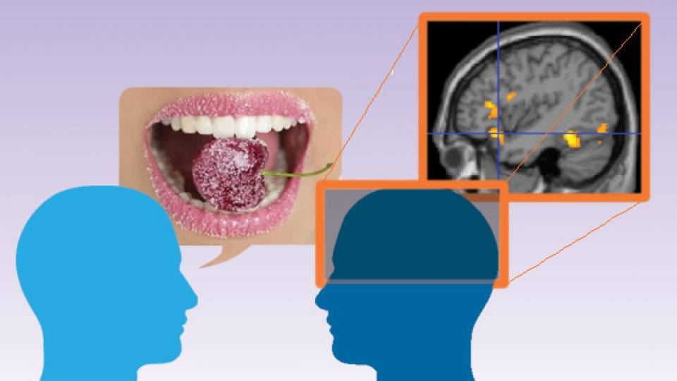An illustration showing a mouth tasting a piece of fruit while another image shows areas of the brain responding.