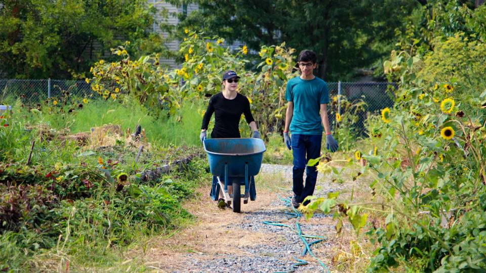 Students push wheelbarrow along path in urban farm plot