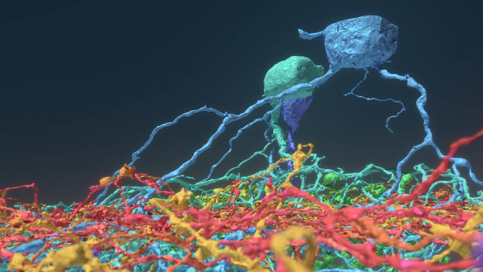 Neurons mapped by video game players