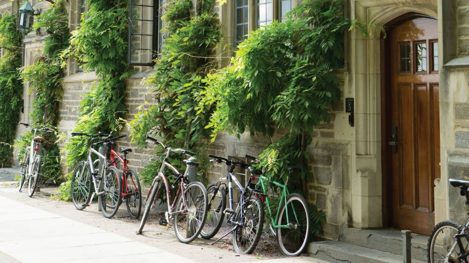 Bikes along a wall with ivy
