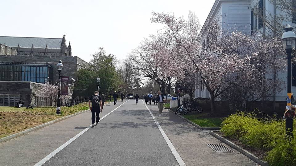 Students walk along the newly named Rivers Way, located behind Firestone Library, during cherry blossom time