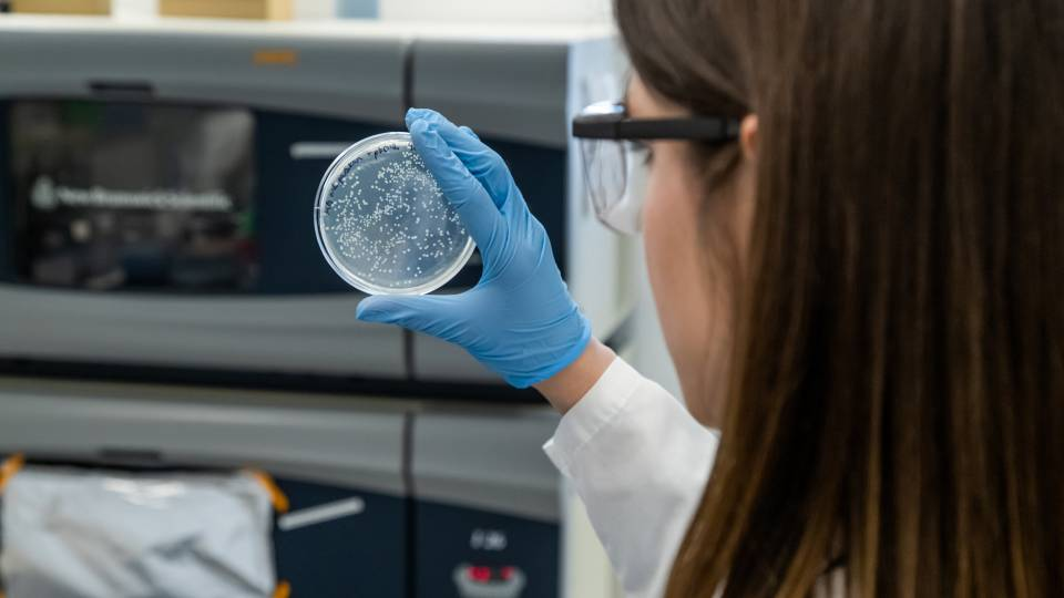 A graduate student looks at a petri dish in a laboratory