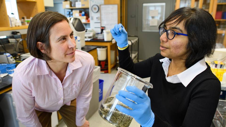 Sabine Petry and Akanksha Thawani examining frog eggs