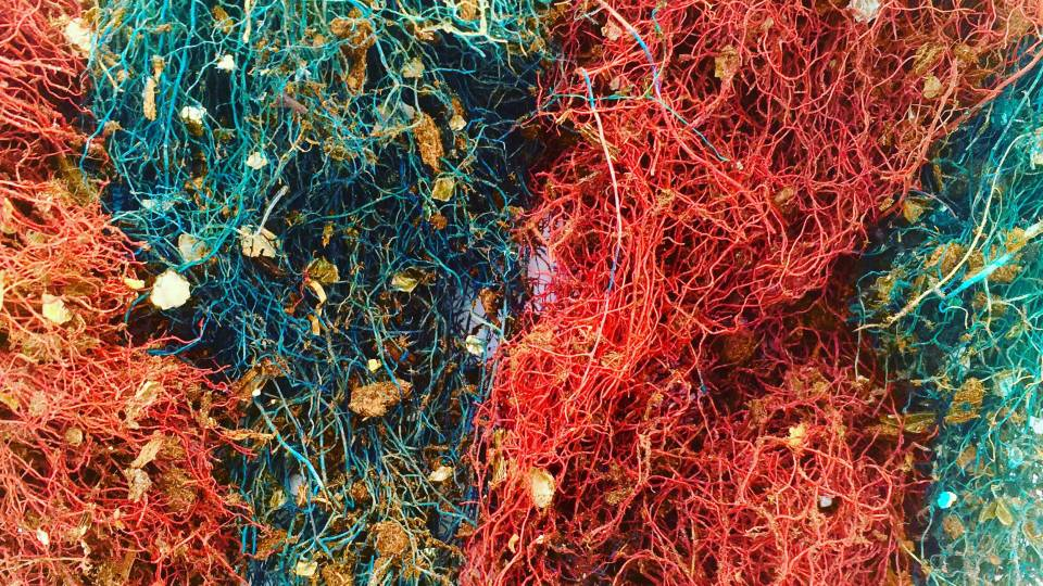 colorful root structures