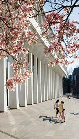 Woodrow Wilson School with Cherry Blossoms