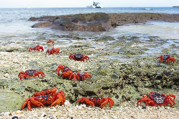 Red Crabs cove