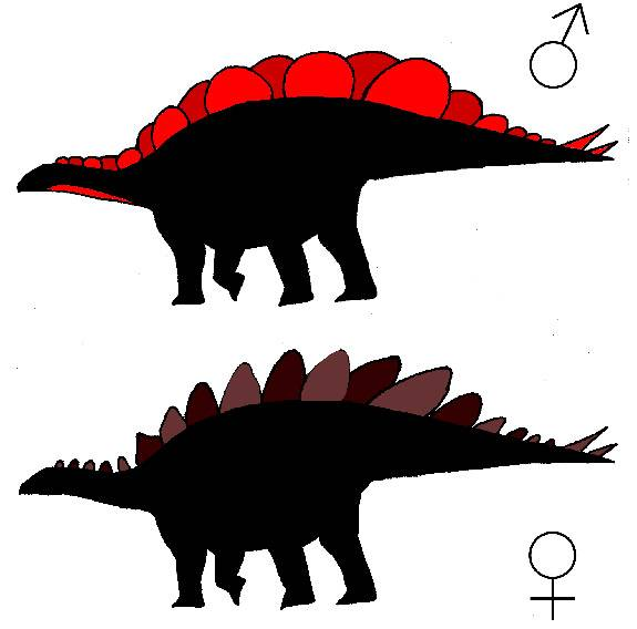 Stegosaurus plates provide first solid evidence that male, female dinosaurs looked different