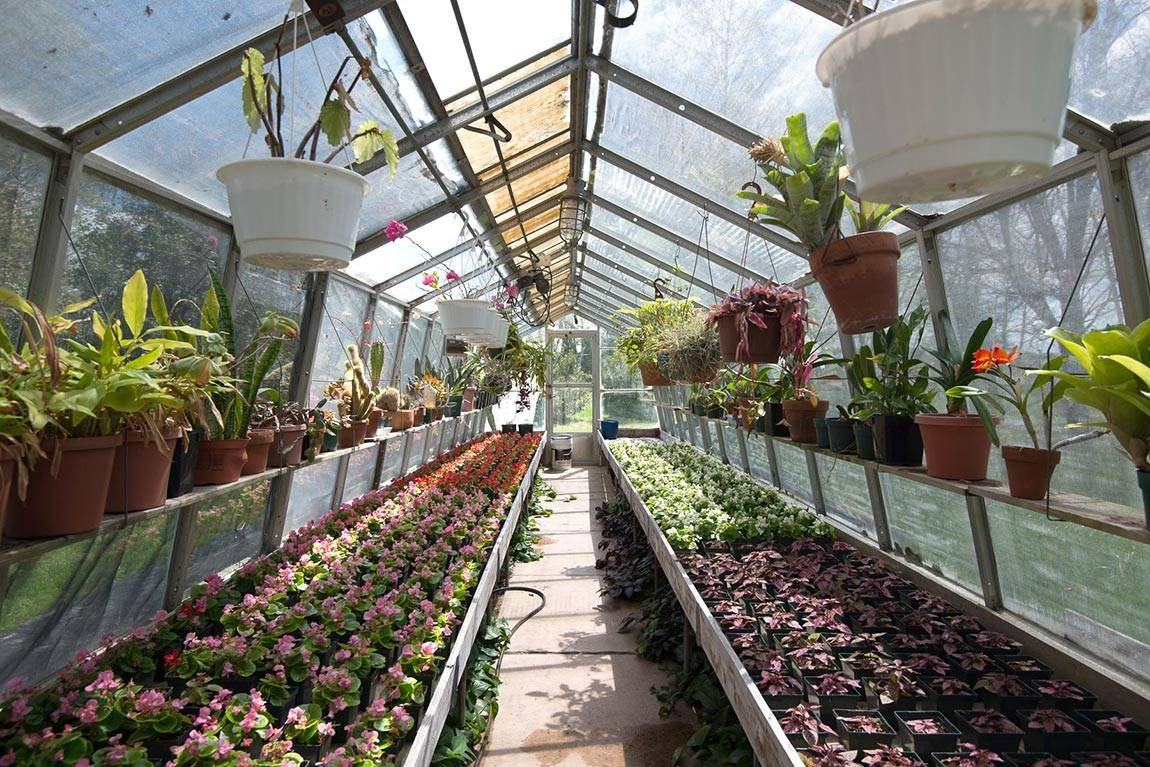 Greenhouse Interior Shot