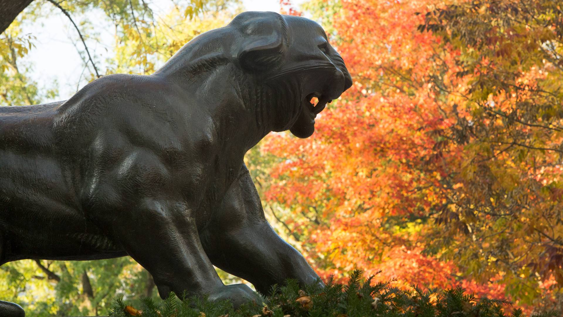 Bronze tiger statue with fall leaves