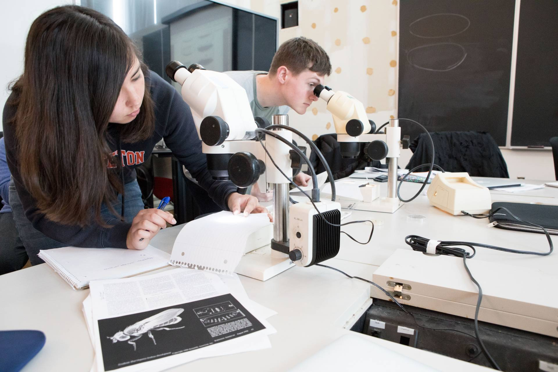 Kate Leung and Thomas Hoopes examine fruit flies under the microscope