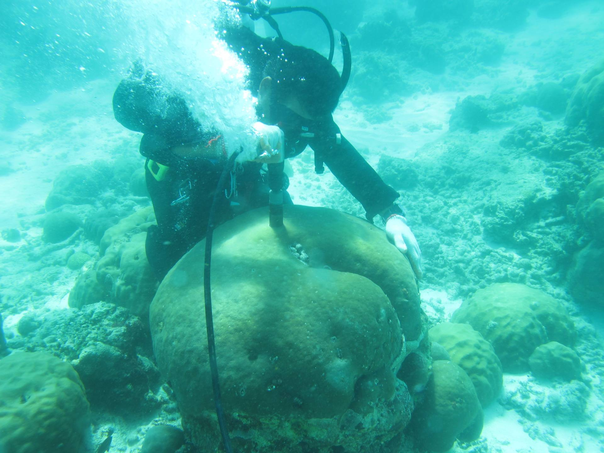 Diver taking a sample of coral