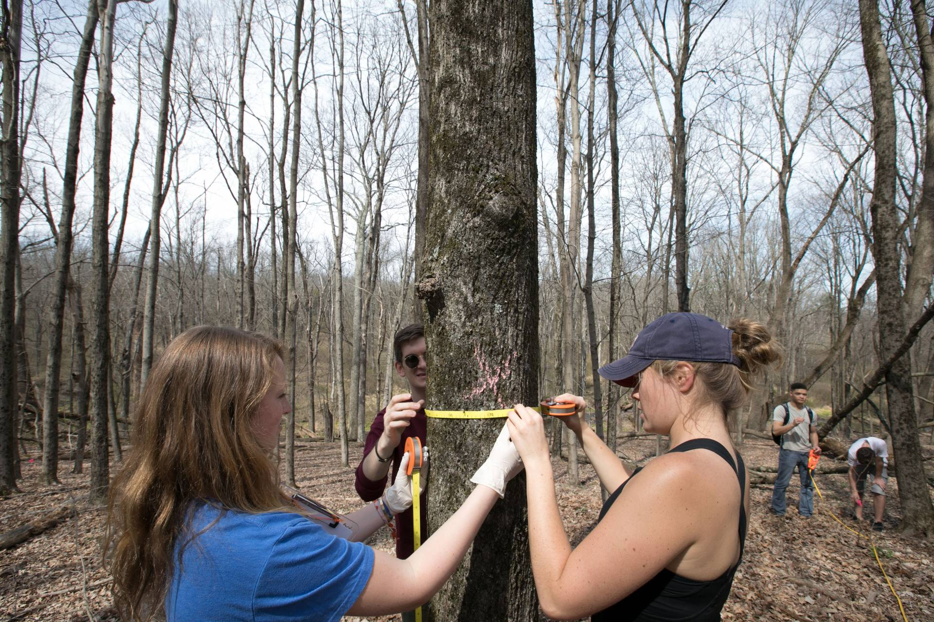 Lilly Chadwick and Addie Gilson measuring trunk of tree