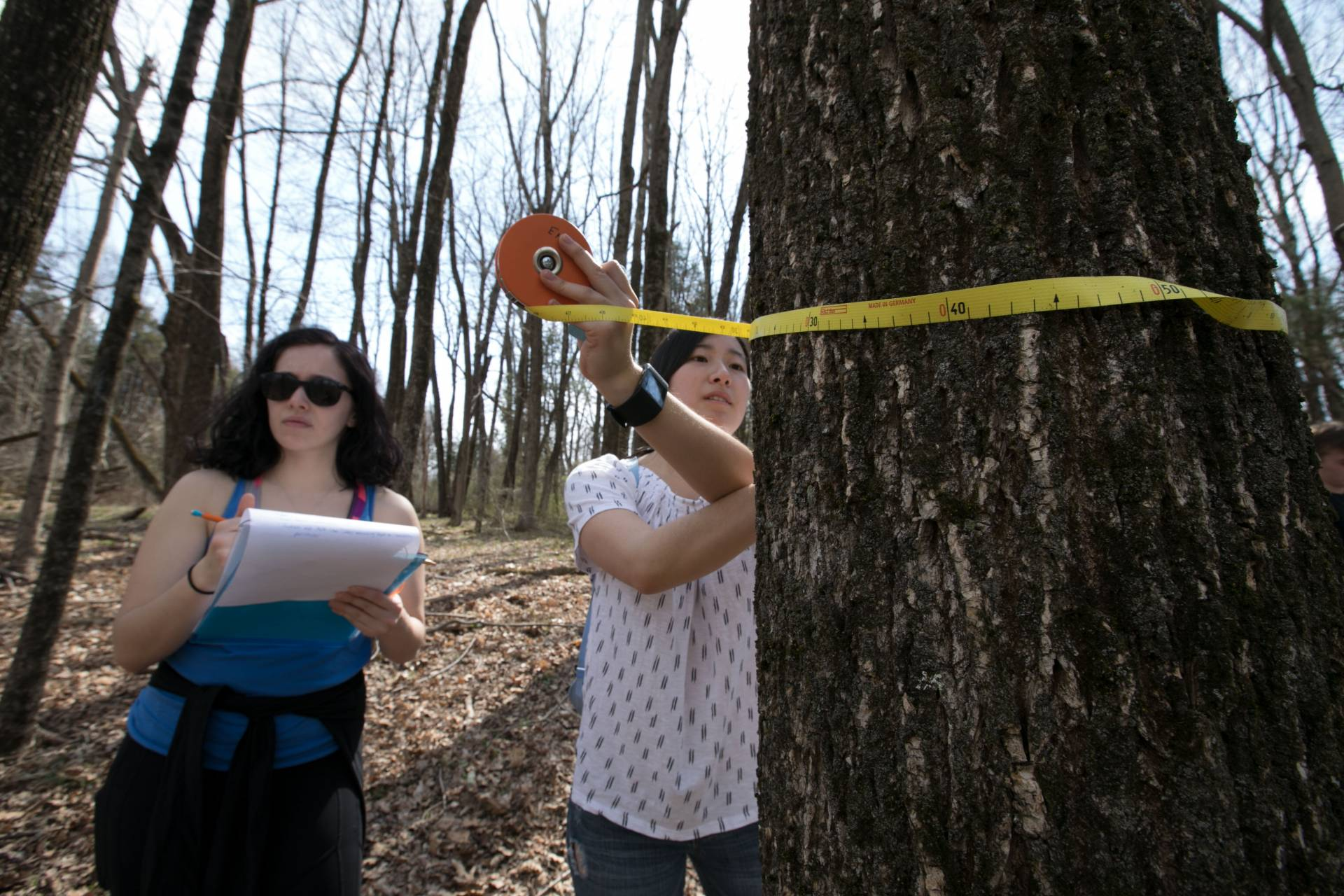 Jessica Reed measuring trunk of tree