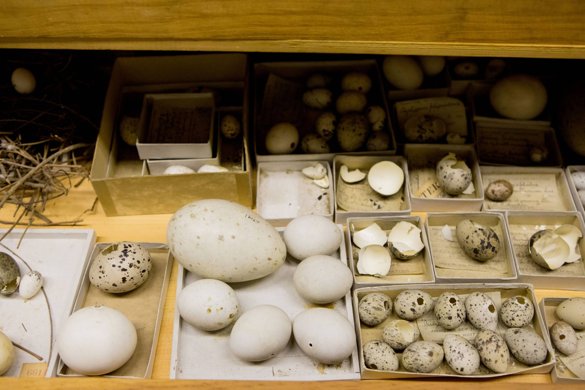 Different-sized eggs sitting in an open drawer