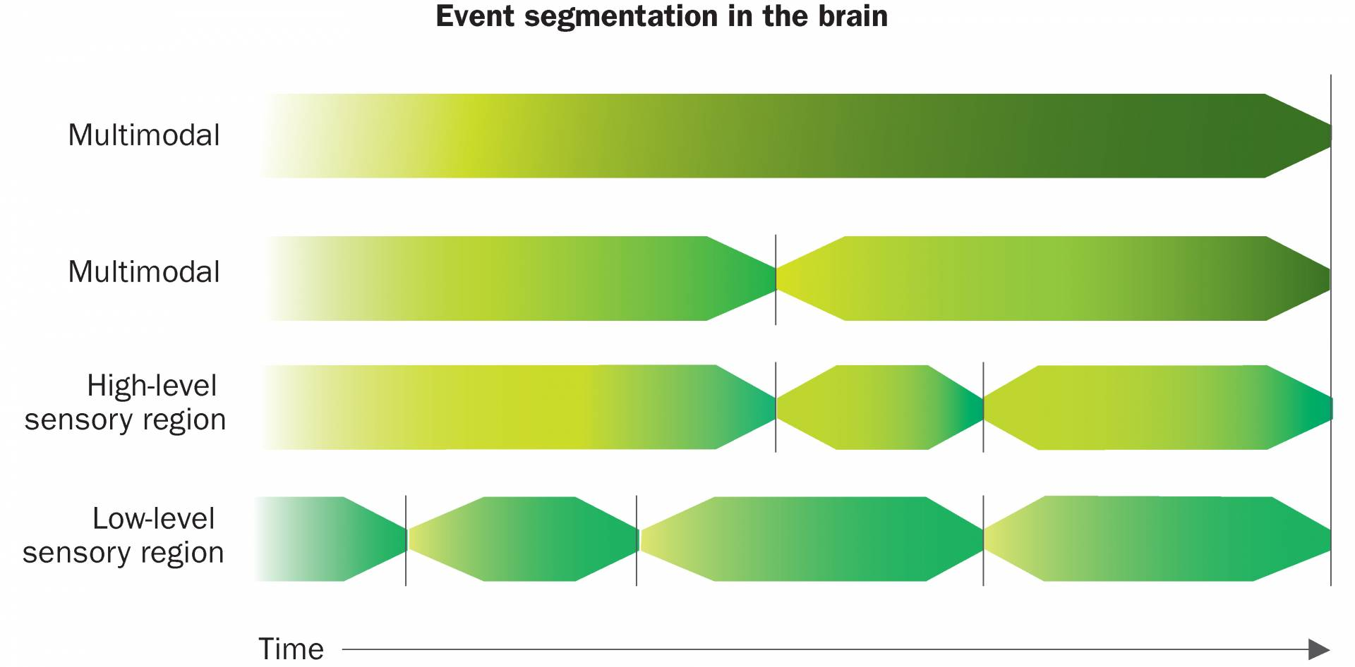 Event segmentation in the brain