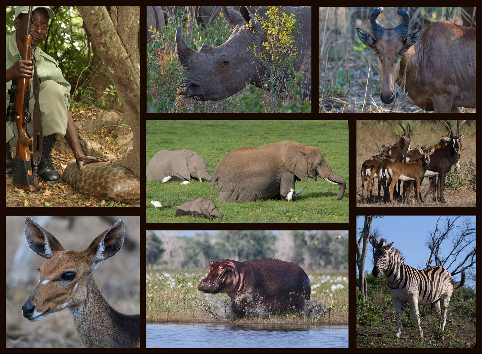 Africa animal collage