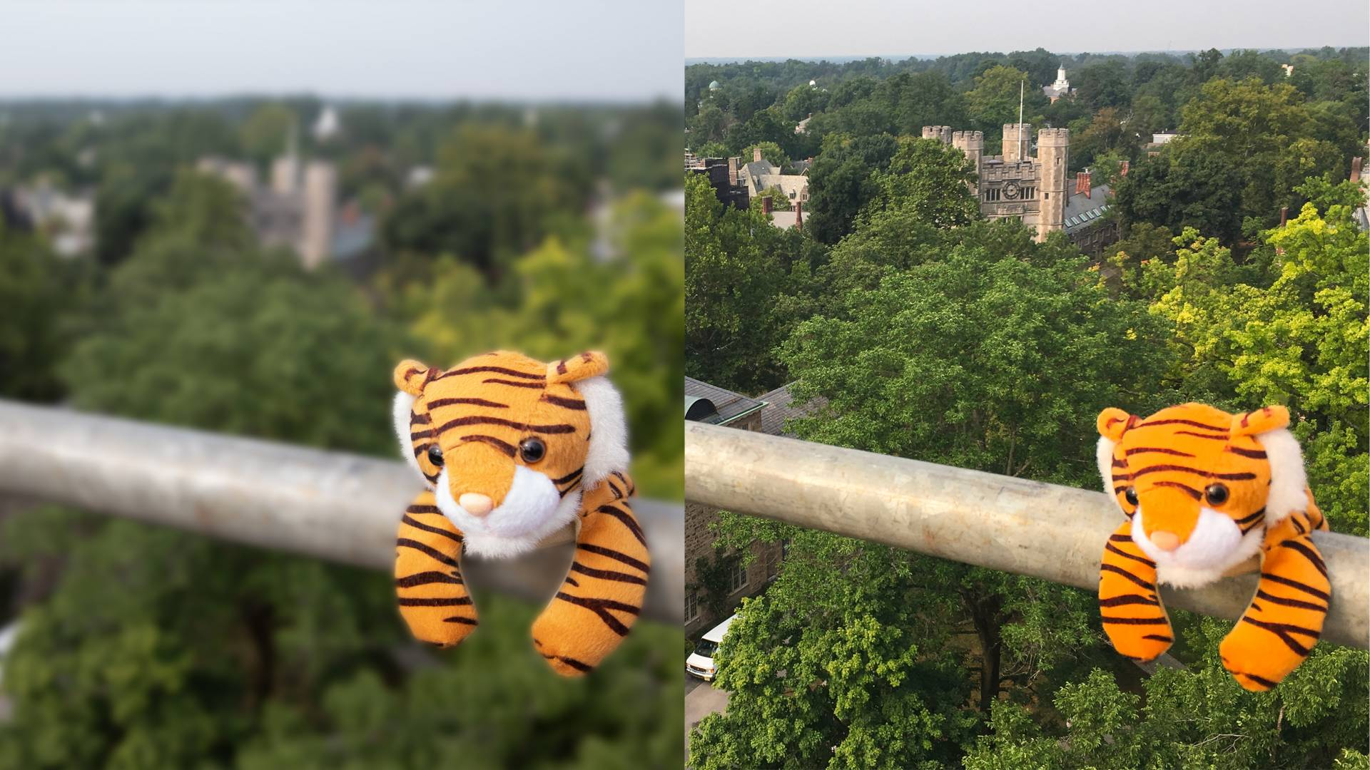 Two images side-by-side: An image of a stuffed tiger on a railing with a blurred campus in the background and an image of the same stuffed tiger with an unblurred campus in the background
