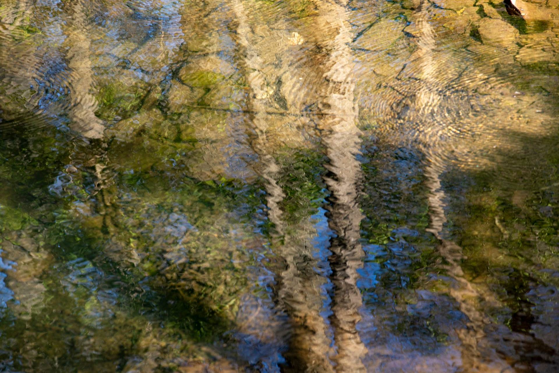 Refections of trees in rippling water