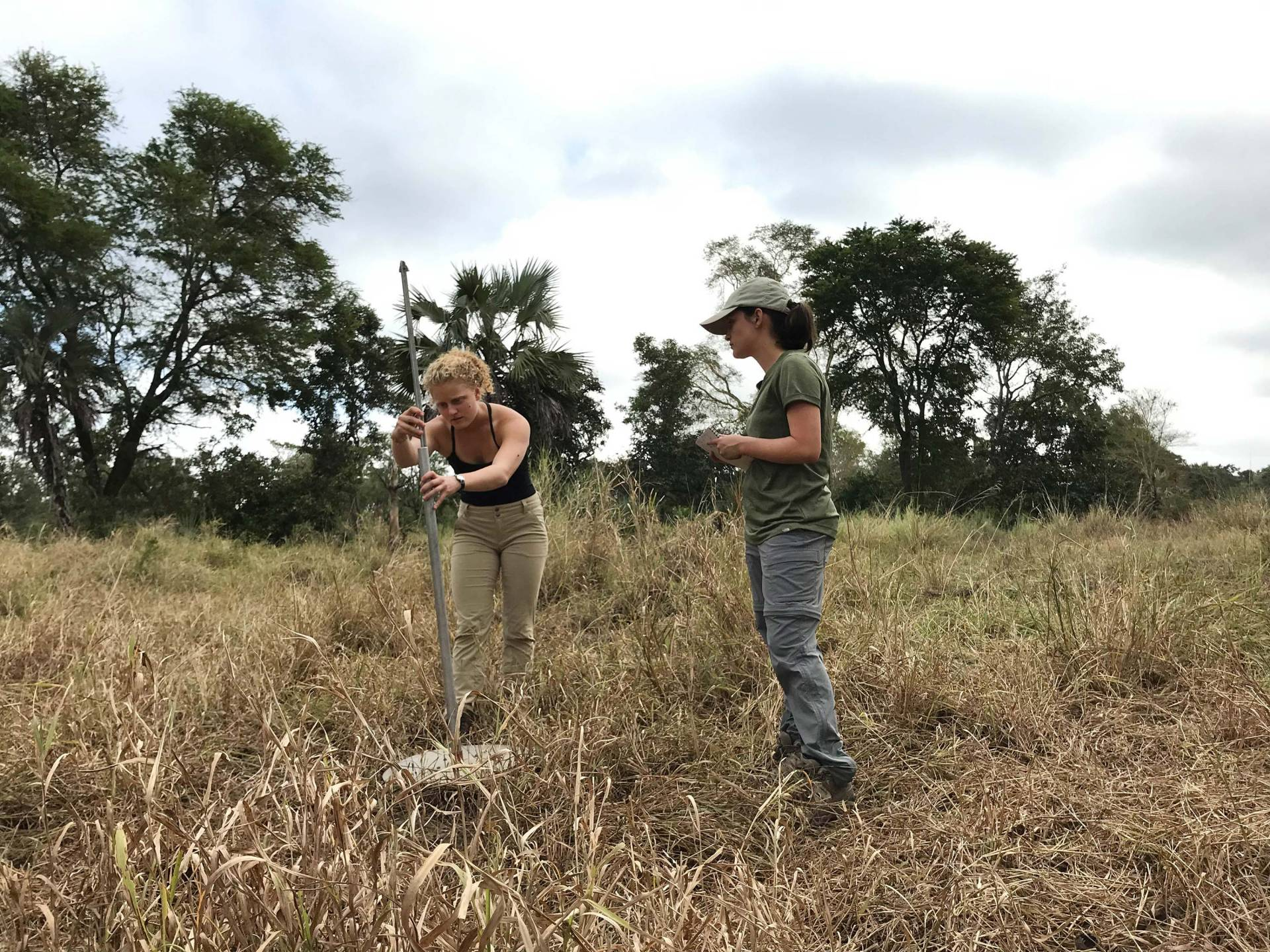 Stahl and another student take measurements in a field