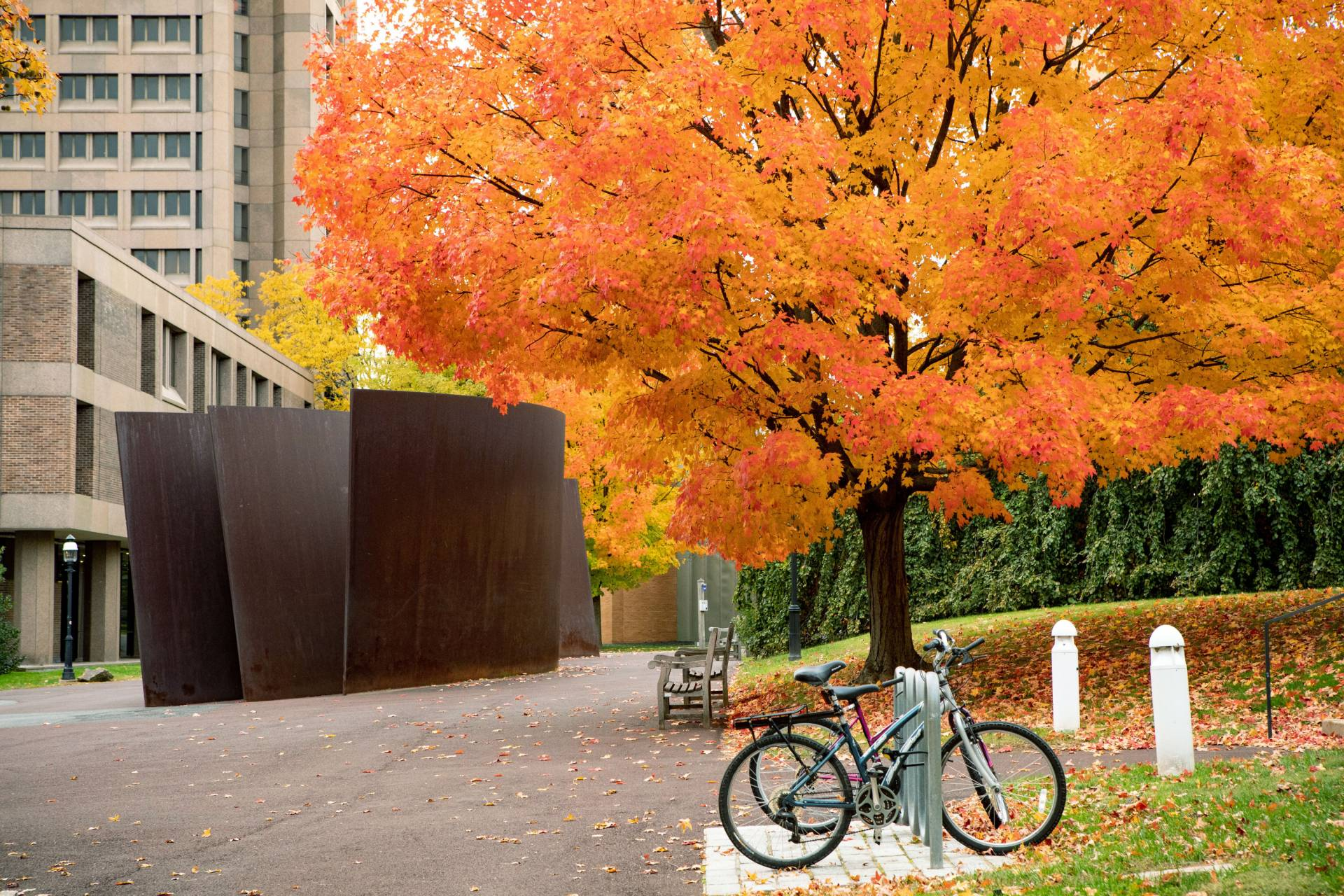 Fall beauty and Richard Serra sculpture
