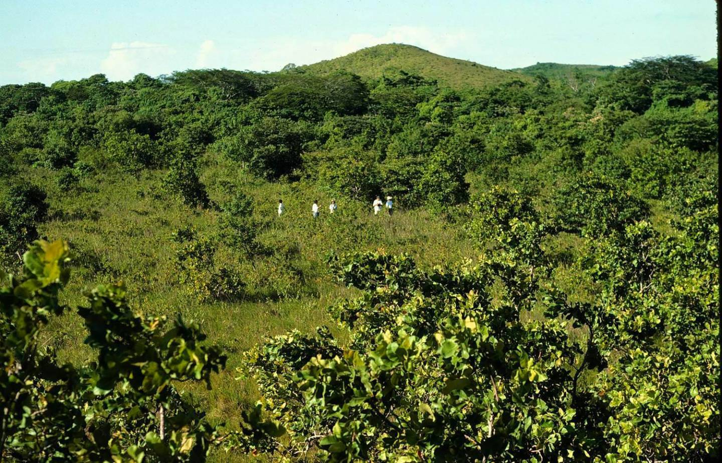 How a bunch of orange peels changed the ecosystem in Central America