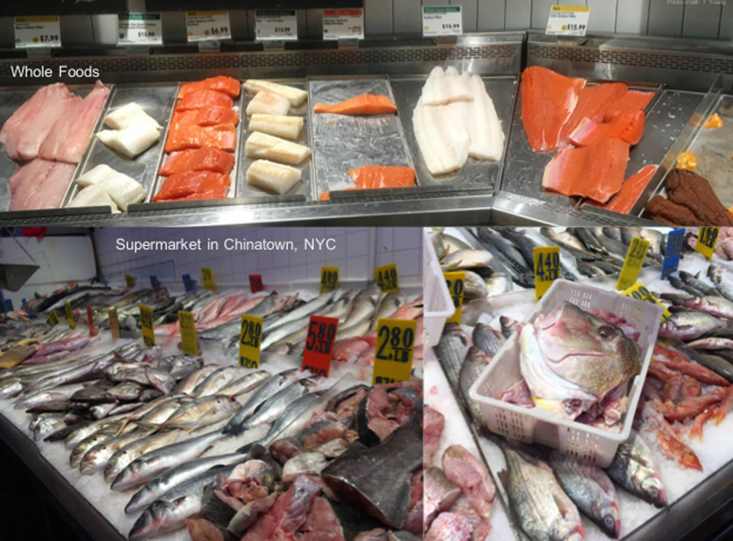 Photos showing fish on sale in whole foods and a chinatown fish market