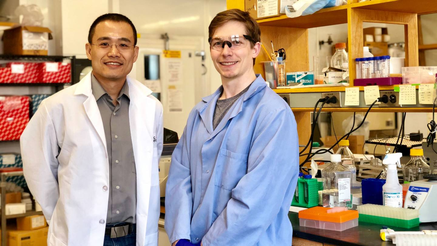 Princeton scientists discover an interaction that helps cancers spread to bone
