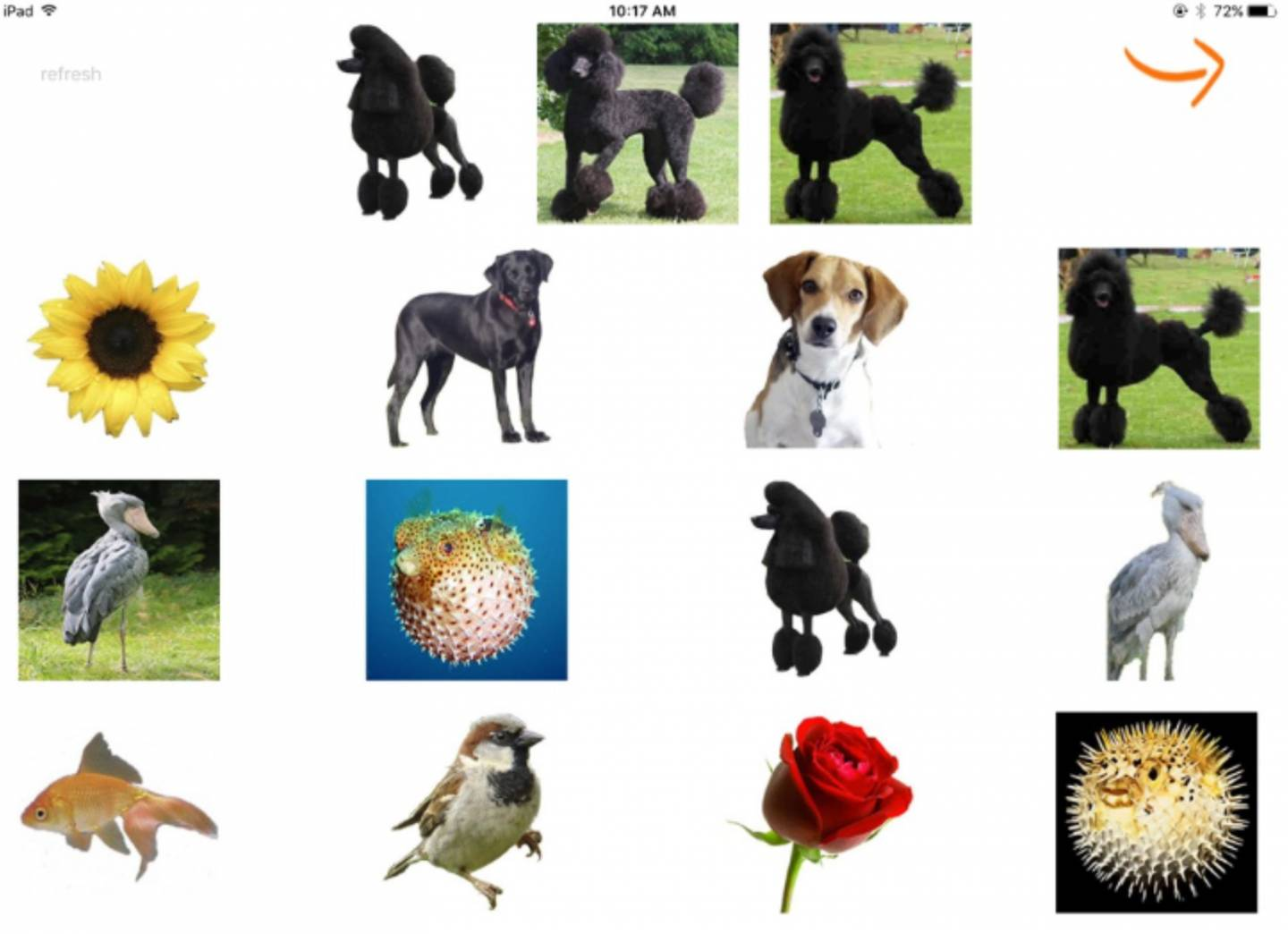 Images of dogs and various other animals and plants