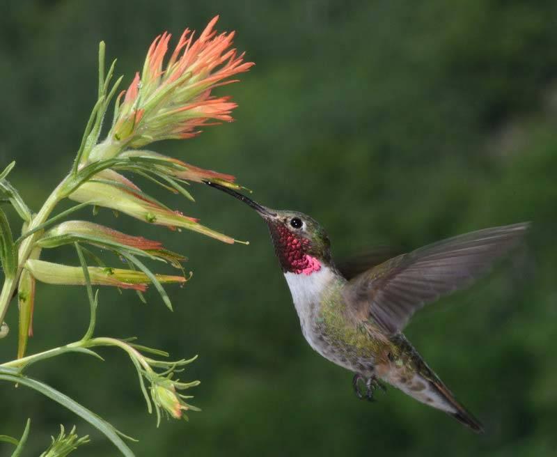 A hummingbird hovers near a flower