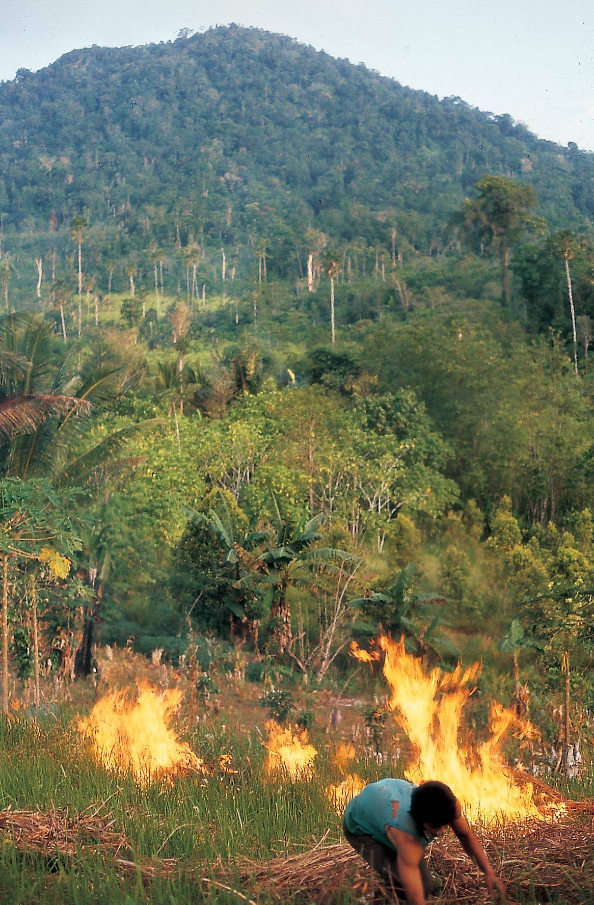 slash and burn deforestion