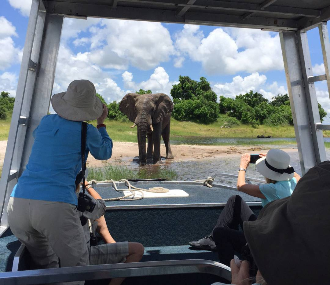 Princeton alumni photograph an elephant from a boat in Africa